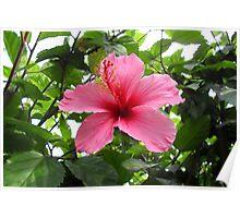 pretty in pink...flower Poster