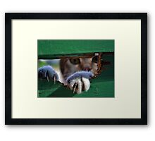 Daily Visitor. Framed Print