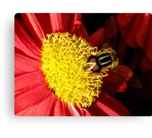 Bee Power Canvas Print
