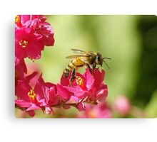 Profile of a Bumble bee sitting on a Red Bud flower Canvas Print