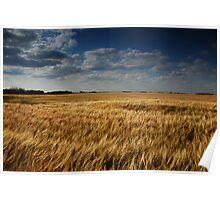 barley fields - ii Poster