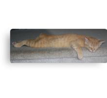 Flat Cat 2 Metal Print