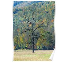 Dreaming  Tree, Catalooche, GSMNP Poster