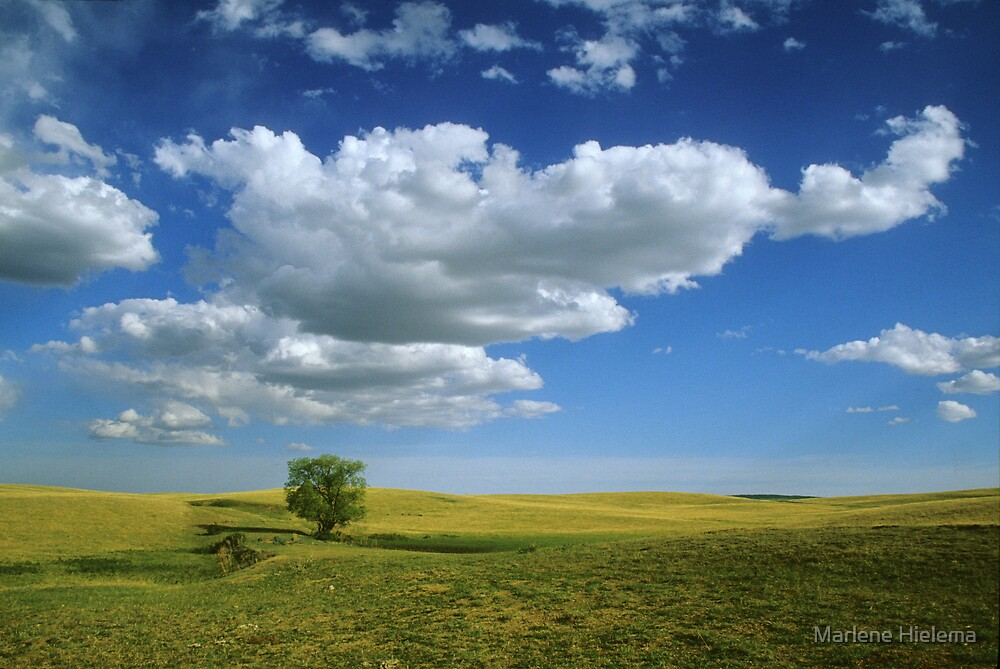 Alberta Prairie by Marlene Hielema