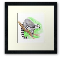 ring-tailed lemur Framed Print
