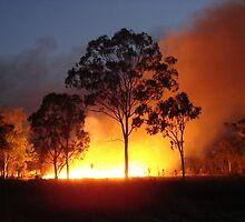 fire tree - backburning at Carmila by valandsnake