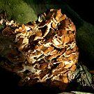Fungi On The Tree by Britta Döll