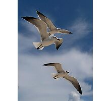 Hudson Beach Florida birds Photographic Print