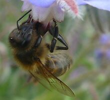 Bee at Blackgang Chine by dustyparasol
