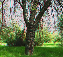 Tree [3d anaglyph] by zolim