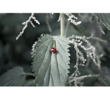 Luck Among the Nettles Photographic Print