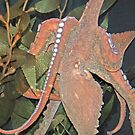 octopus by Robin D. Overacre