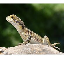 Reptiles are cute Photographic Print