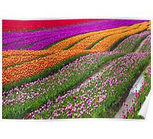 Monet Alive-colorful tulip field waves Poster