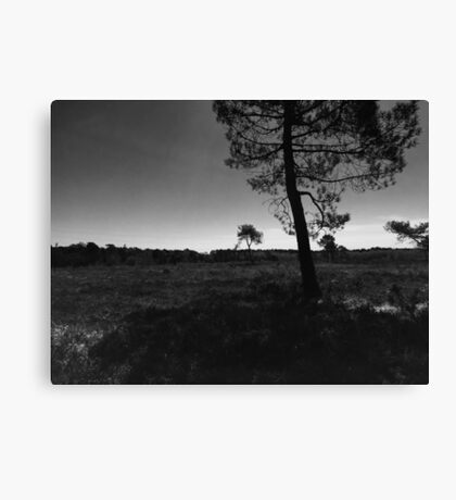 Grey scale  Canvas Print