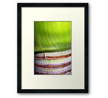 Two tone bark Framed Print