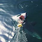 Taking the Bait - South Africa by timstathers