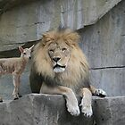 The Lion and The Lamb by Tim Denny