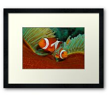 False Anemone Clownfish Framed Print