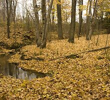 Fallen Leaves on the creek (2) by Sean McConnery