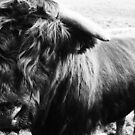 Highland Cow in Black & White - The Scottish Highlands by timstathers