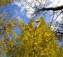 Fall, worth looking up to. by Sean McConnery