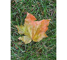 Fall Leaf Photographic Print