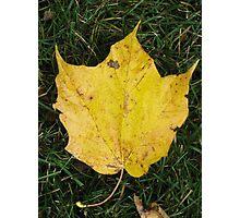 Fall leaf 2 Photographic Print