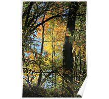 Michigan Colors Poster