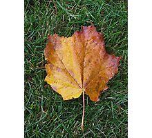 Fall Leaf 3 Photographic Print