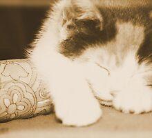 Sleepy Kitty by Rabecca Primeau