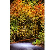 Fall Drive hdr Photographic Print