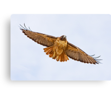 1010092 Red Tailed Hawk Canvas Print