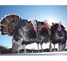 Thanksgiving Survivors Photographic Print