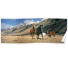 Station horses Poster
