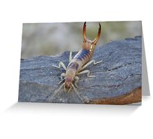 Vicious little insect Greeting Card