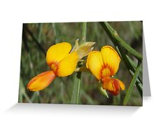 Bacon and egg flowers Greeting Card