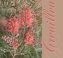Grevillea #2 by Elaine Teague