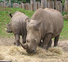 Mother and child rhinoceros by EmmaS-P