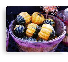 Baby Pumpkins Canvas Print