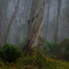 Into The Mist  2 - Barrington Tops - The HDR Experience by Philip Johnson