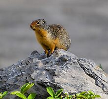 King of the mountain by becmayr