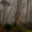 Barrington Tops # 1 - Barrington Tops National Park by Philip Johnson