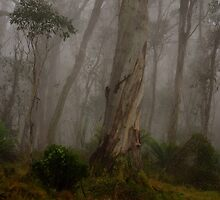 Barrington Tops # 1 - Barrington Tops National Park by Philip Johnson