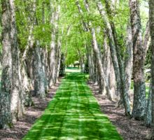 Line of Birch Trees Sticker