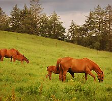 Aughnacliffe Chestnuts by Jim Dempsey