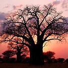 Baobab Sunset - Tarangiri National Park, Tanzania by timstathers