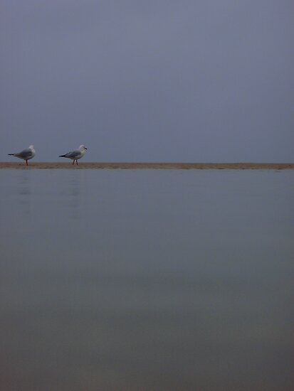 Gulls. by CourtneyE