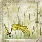 Golden Leaf & Dragonfly by Lesley Smitheringale