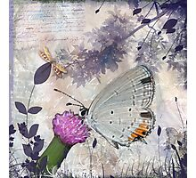 Lavender Wings Photographic Print